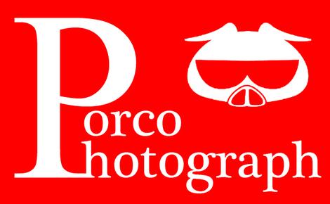 Porcophotograph_l